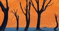 Мертвый лес в Африке