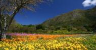 Кирстенбош, ботанический сад в ЮАР