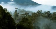Остров Борнео (32 фото)