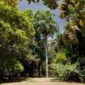 pamplemus-natsionalnyy-botanicheskiy-sad[1]