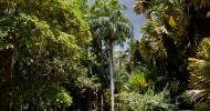 Ботанический сад Памплемус на острове Маврикий (22 фото)