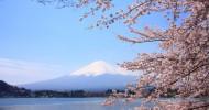 Цветение сакуры в Японии (34 фото)
