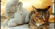 Коты-буддисты (22 фото)