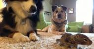 Бельчонок в собачьей семье (фотографии)