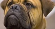Необыкновенные фотопортреты собак (26 фото)