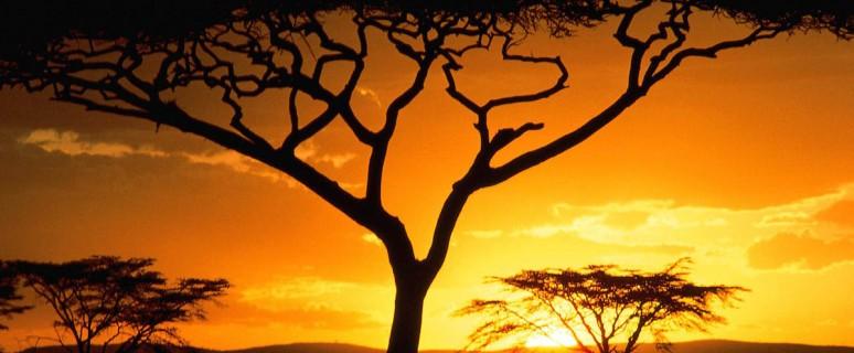 Keniya-Afrika[1]