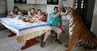 Семь тигров под одной крышей