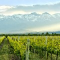 Vineyard-in-Mendona-Argentina-South-America-Tours-On-The-Go-Tours[1]
