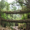 umshiang_double-decker_root_bridge[1]