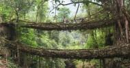 Живые Мосты Черапунджи, Индия