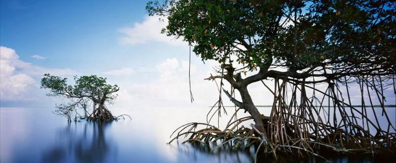 Everglades-USA