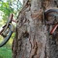 velosiped-vrosshiy-v-derevo