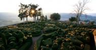 Висячие сады замка Маркизъяк (Франция). 24 фото