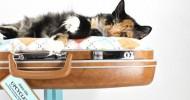 Трон для кота в домашних условиях
