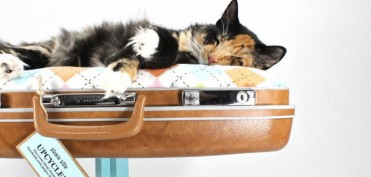 Koffer-op-poten-kat