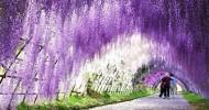 Водопады цветов в Японии