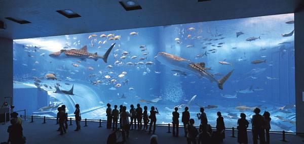 Gigantskiy-akvarium-v-Yaponii2