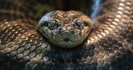 Как спастись от анаконды