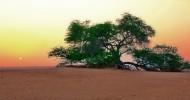Самое одинокое дерево в мире — Дерево жизни в Бахрейне