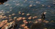 Огромная медуза