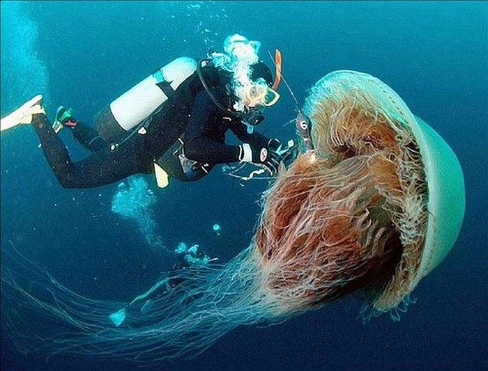 meduza-11