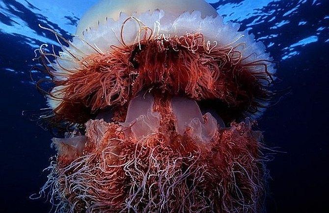 meduza-13