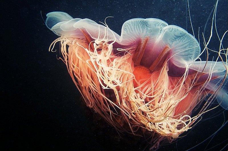 meduza-4