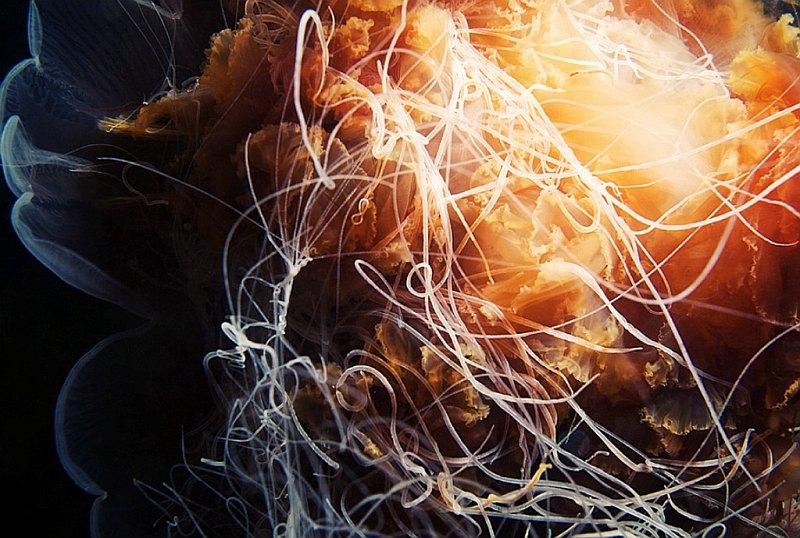meduza-5
