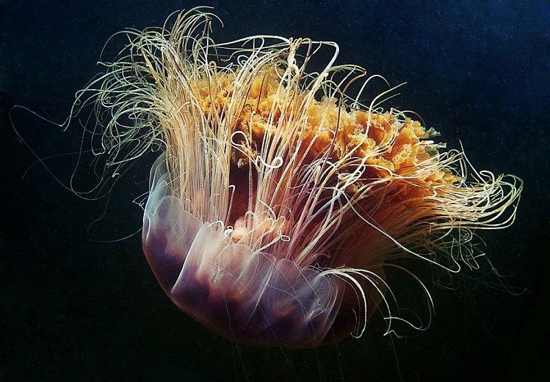 meduza-6