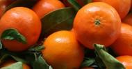 Как мандарины стали символом Нового года?