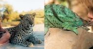 Типпи Дегре и дикие животные Африки (29 фото)