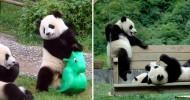 Детская площадка для малышей панды (18 фото, видео)