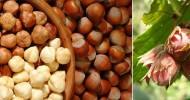Фундук — кладезь витаминов