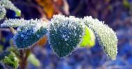 Природа, покрытая инеем (28 фото)
