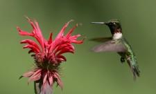 colibri_001
