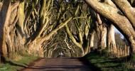 Дорога «Темный тупик» в Ирландии