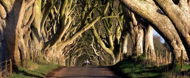 01-dark_hedges