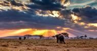 Национальный парк Серенгети в Танзании — ФОТО