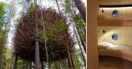 Дом-гнездо на деревьях