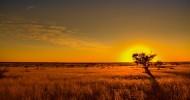 Пустыня Калахари, Южная Африка