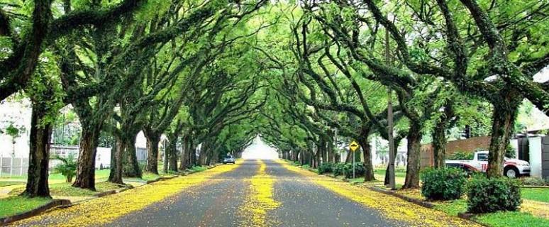 rua-goncalo-de-carvalho
