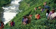 Основные города и достопримечательности Шри-Ланки