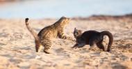 Кошачий пляж