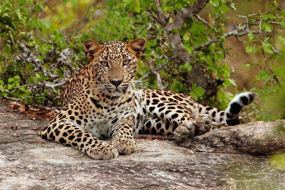 Национальный парк Яла - Шри-Ланка