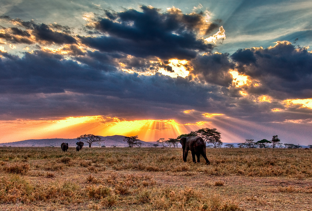 Национальный парк Серенгети (Serengeti)