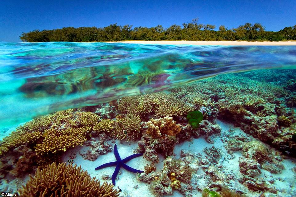 Галапагосские острова: подводный мир