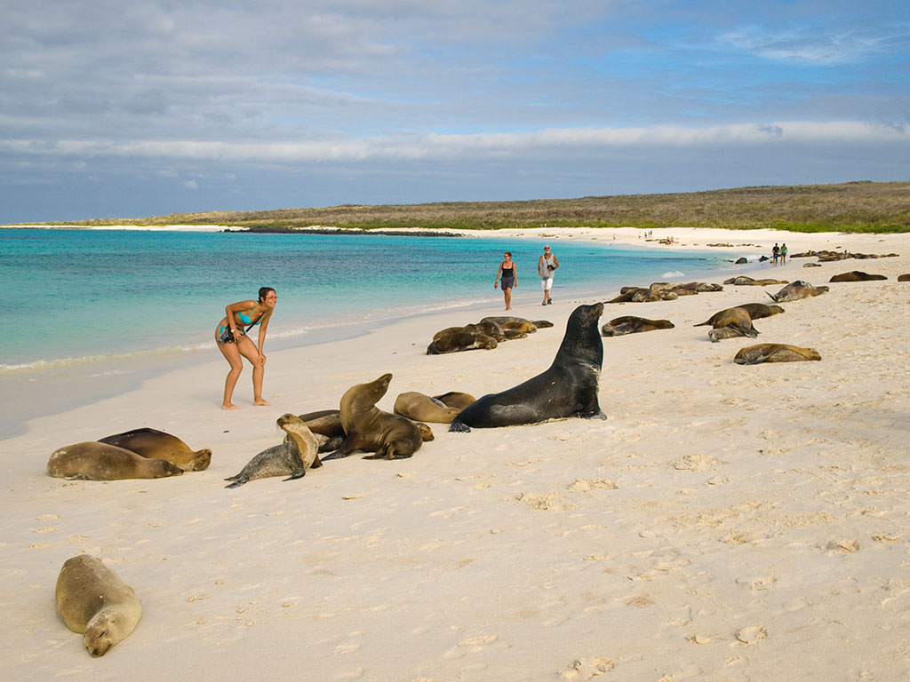 Морские львы на пляже. Галапагосские острова
