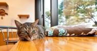 Антикафе с кошками – погрузитесь в атмосферу спокойствия и комфорта