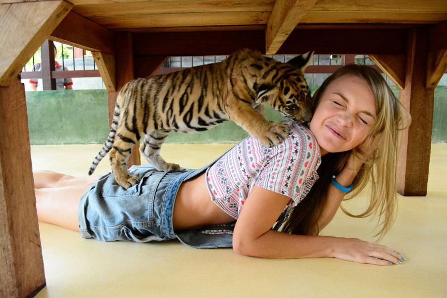 Tiger Kingdom Phuket - Королевство тигров на Пхукете