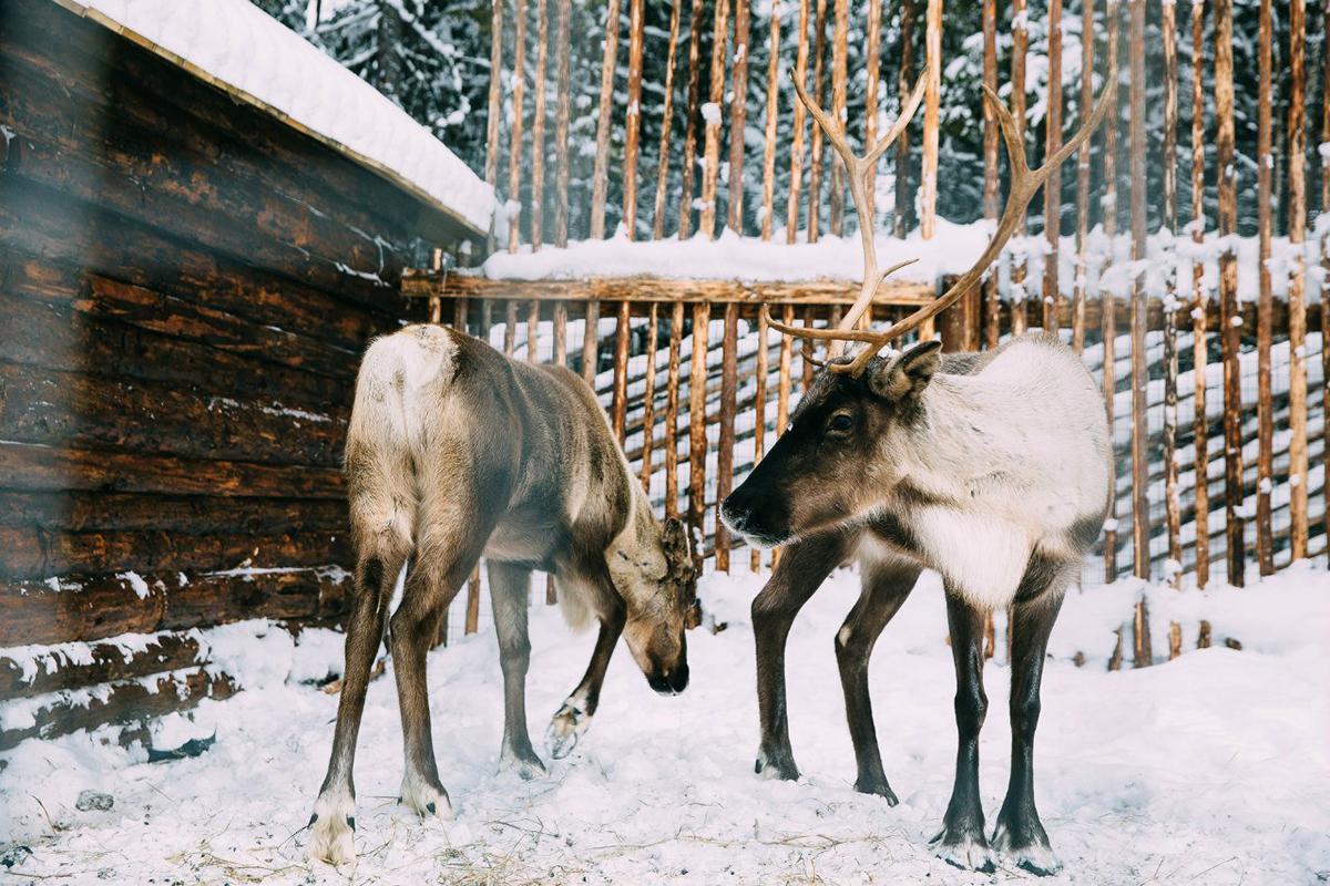 Встречаем Новый год в Карелии